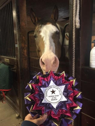 Sol Horse Star of the Month.jpg