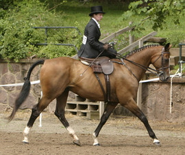 Laureen and Black Tie USET Side Saddle