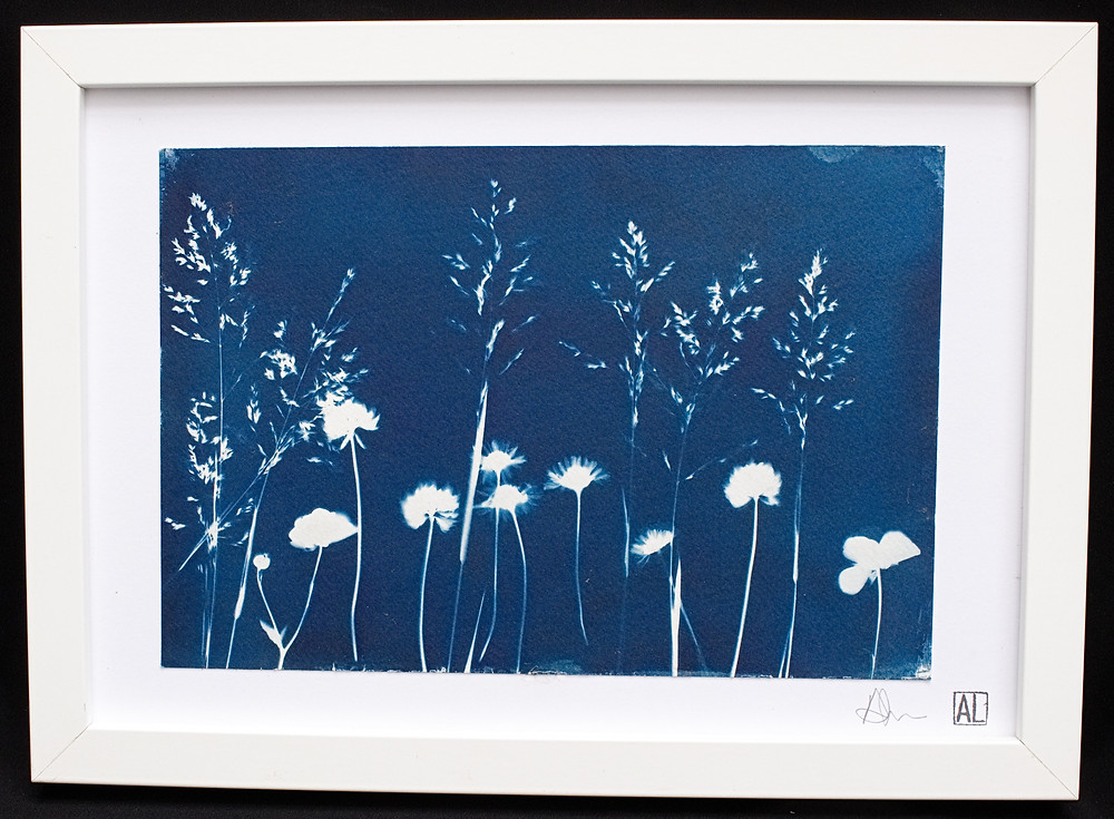 Cyanotype of flowers and grasses