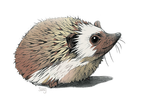 Print, 'Hedgehog'