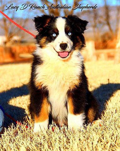 puppybrute.jpg