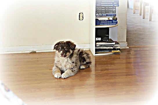 puppymarkie2.jpg