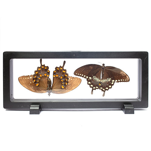 Real Framed Butterfly Pair