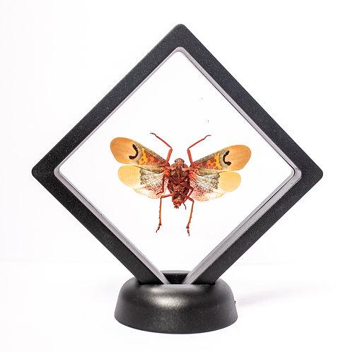 Real Lanternfly (Framed)