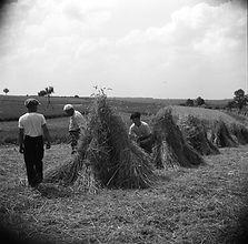 Hay bundles Freudental Mappe B3-014.jpg