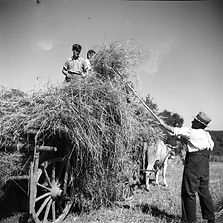 Loading hay (_) on the cart, Freudental