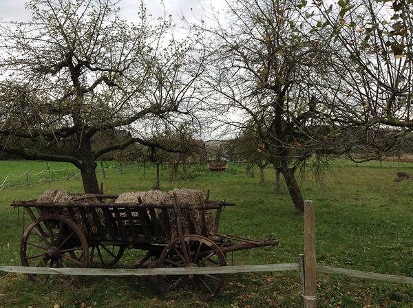 Freud, hay wagon.JPG