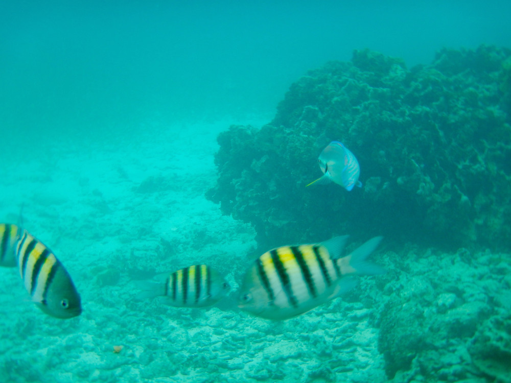 underwater Roatan