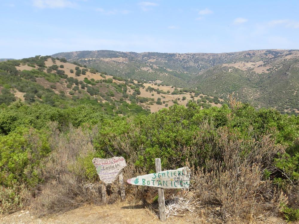 Path to Temple in Sardinia
