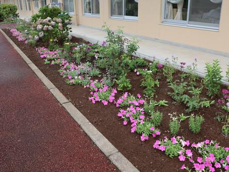 梅雨の中庭