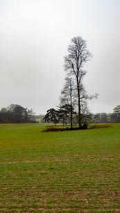 Solitary tree in springtime