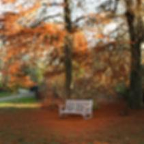 Autumn seat 020219-0363.jpg