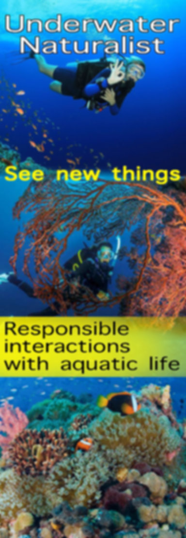 Underwater Naturalist.jpg