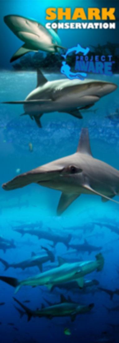 Shark Conservation.jpg