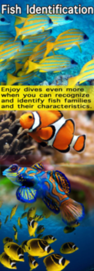 Fish Identification.jpg