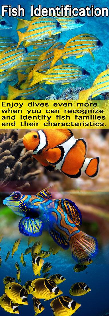 Fish Identification.jpg