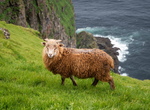 Visiting the Faroe Islands - Part 1