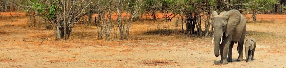 5_redenen_om_Zambia_te_bezoeken_edited_e