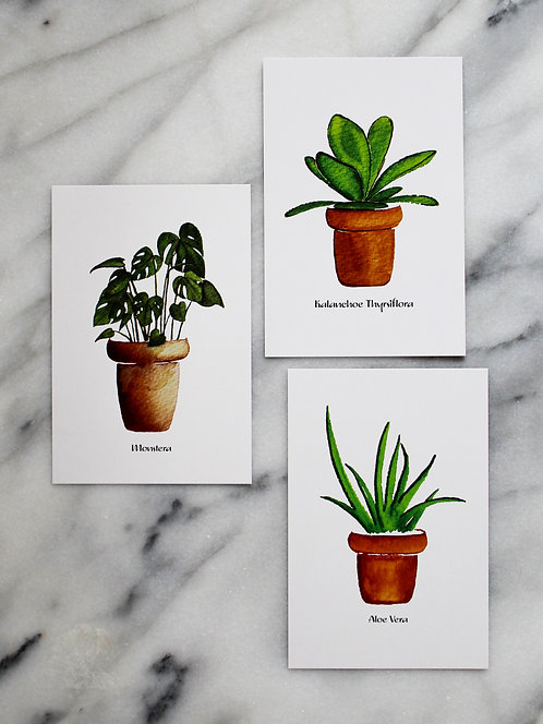 House Plants - Postcards