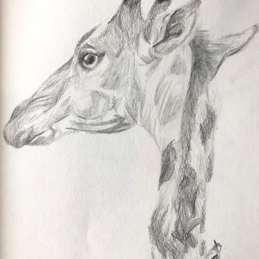 Giraffe with a little companion