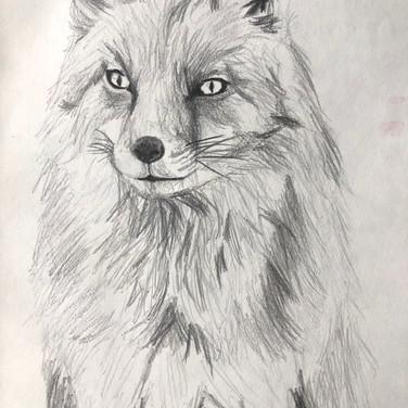 A Quick Fox Sketch