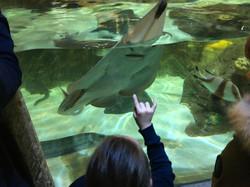 Year 6 Sealife Centre Visit