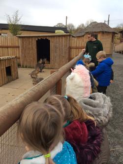 Year 1 Exotic Zoo Visit