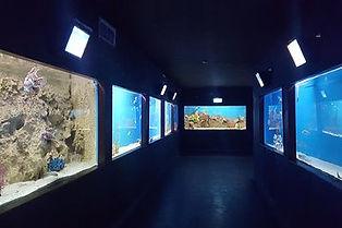mundo marino.jpg