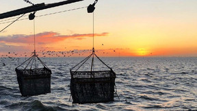 The Future of Mussel Farming: Damen Leads the Way With Zero Emissions Research