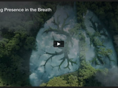 Finding Presence in the Breath