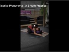 Investigative Pranayama - A Breath Practice