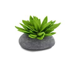 SucculentGreen