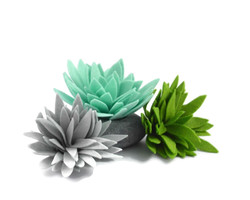 SucculentGroup