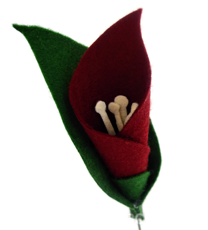 RedCallaLily