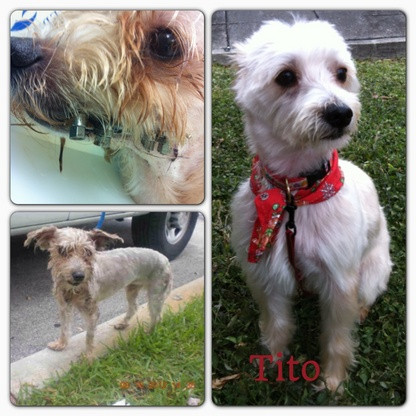 This is Tito!