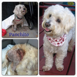 This is Panchito!