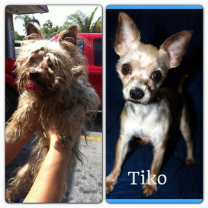 This is Tiko!