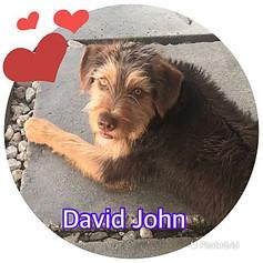 DAVID JOHN.jpg