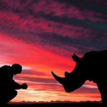 Rhino Cry