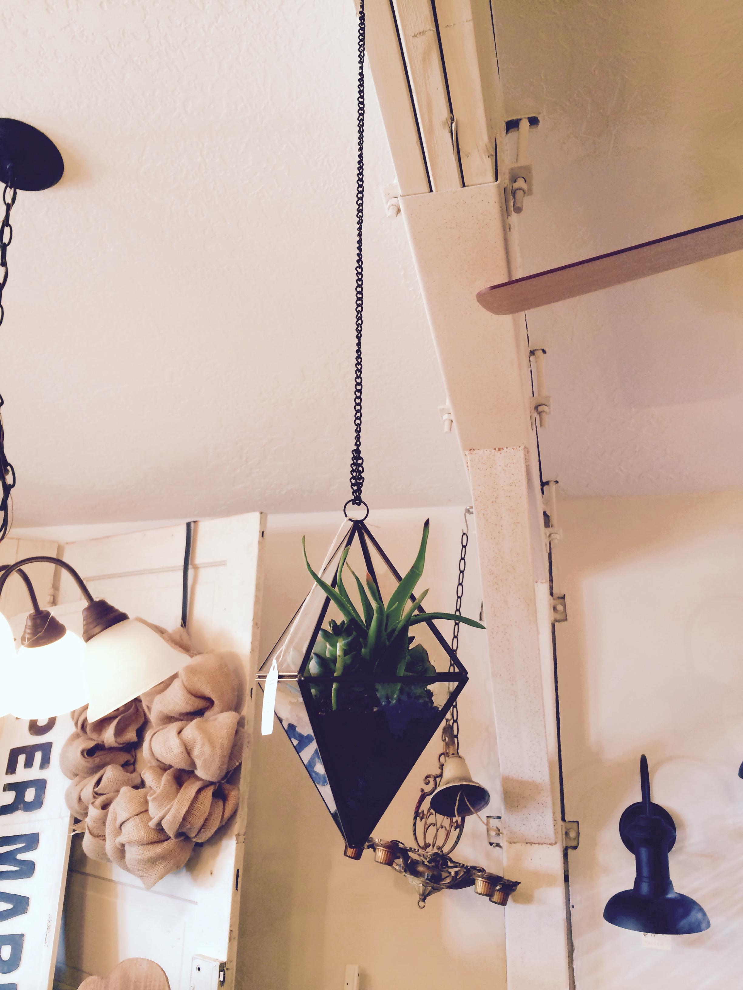 Hanging Succulent Terrarium $15