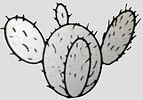 Cactus Log.jpg