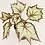 Thumbnail: Begonia Rex – BEWITCHED LAVENDER