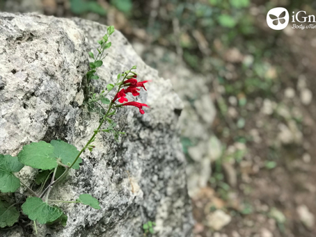 A Bloom Amidst the Rocks