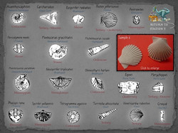 20 Fossil Lab