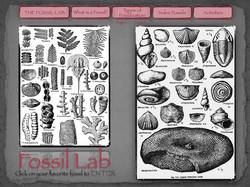 1 Fossil Lab