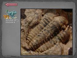 28 Fossil Lab