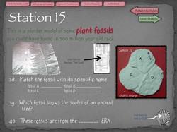 36 Fossil Lab