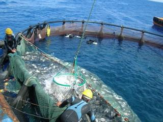 Commercial Aquaculture development program