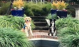 Service Dog Training | Nationwide Locations | Compass Key