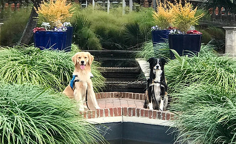 Service Dog Training - Compass Key